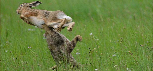 Landesforsten Rheinland-Pfalz: Wildkatze
