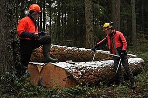 Landesforsten Rheinland Pfalz Forstamt Altenkirchen